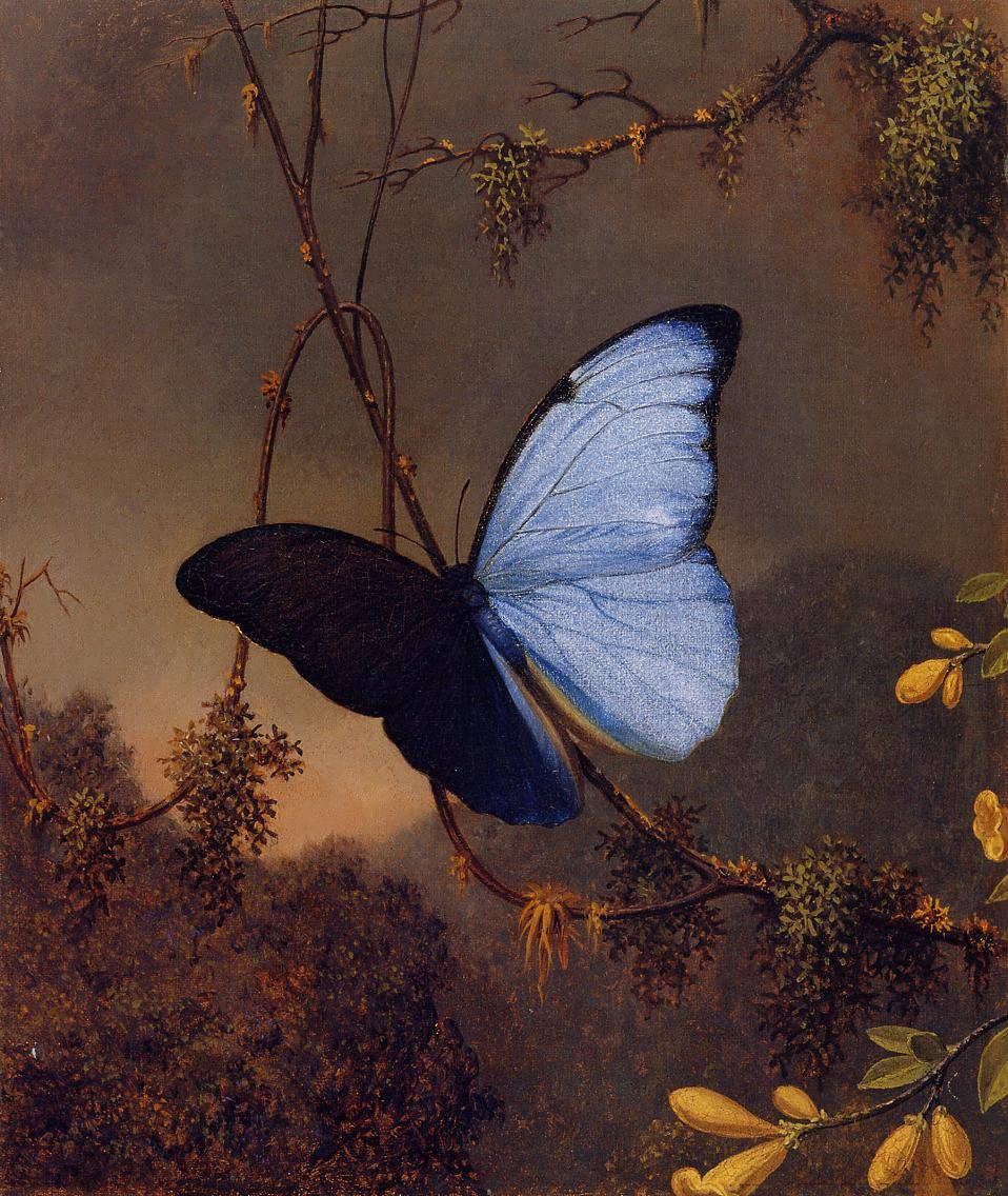 MartinJohnsonHeade-BlueMorphoButterfly