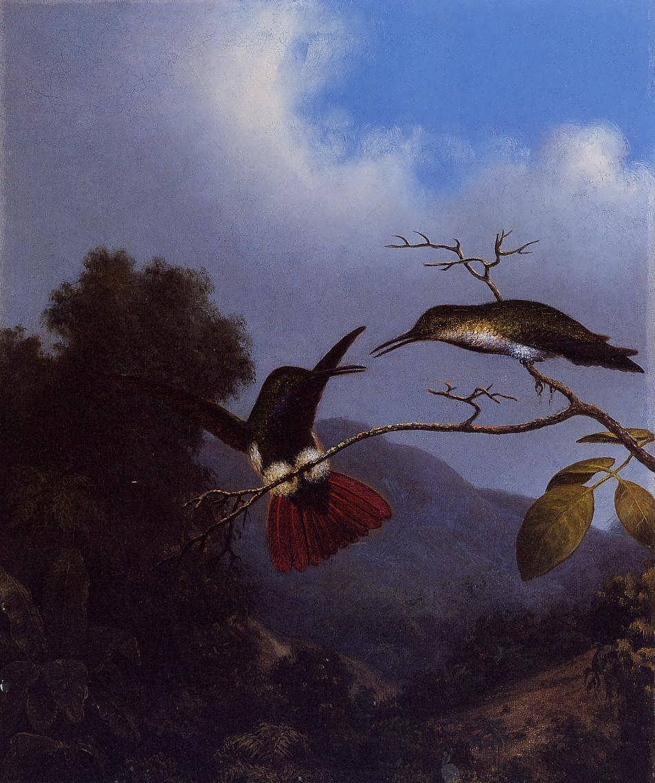 MartinJohnsonHeade-Black-ThroatedMango