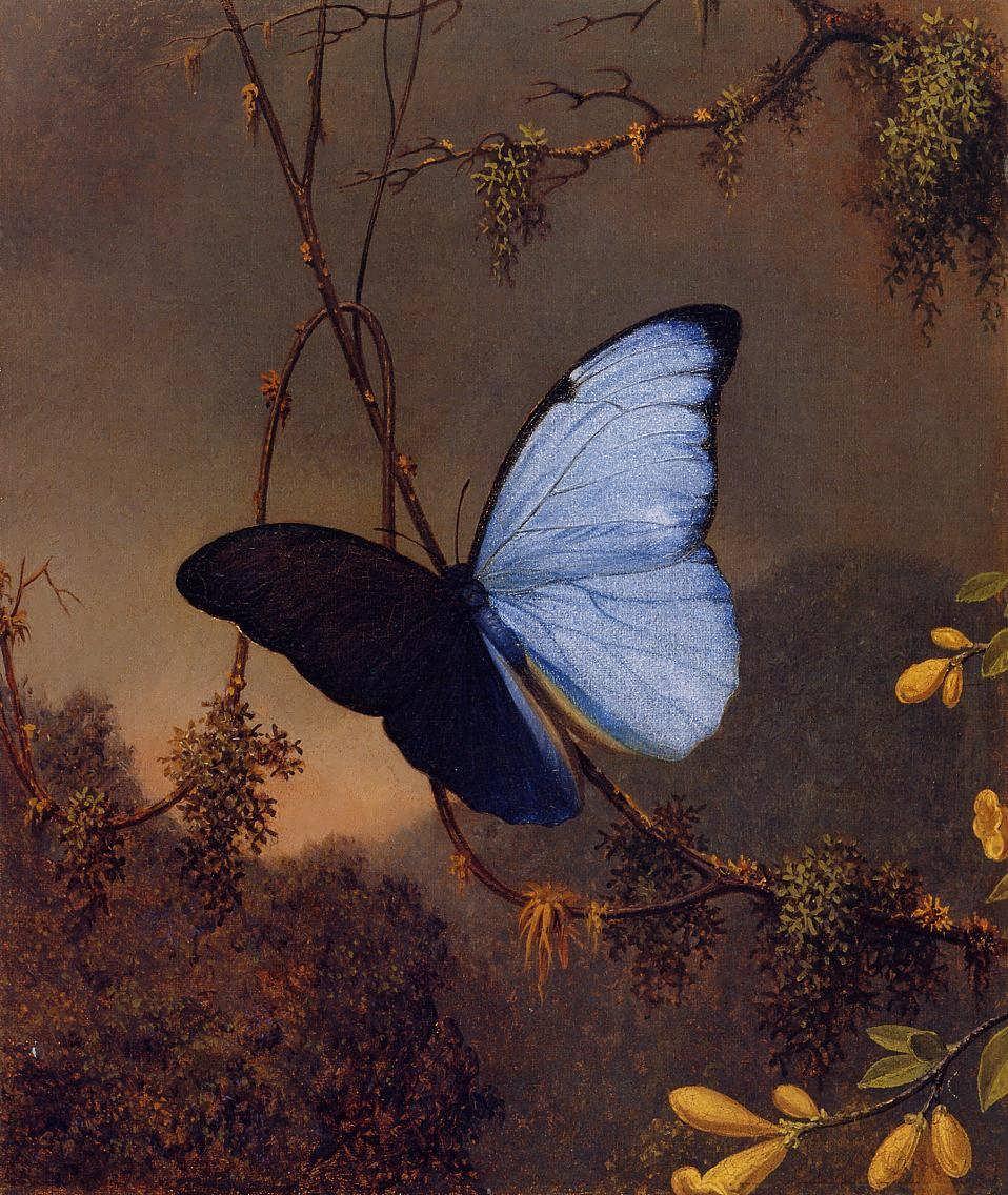 MartinJohnsonHeade-BlueMorphoButterfly